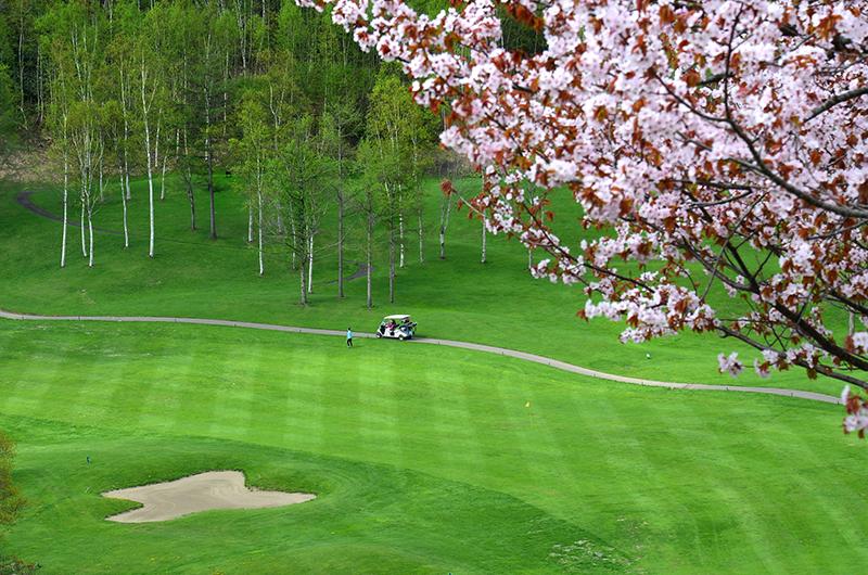 niseko golf course spring sakura